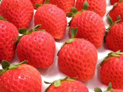 イチゴがなくちゃはじまらない!「あおもり産の夏秋いちご」